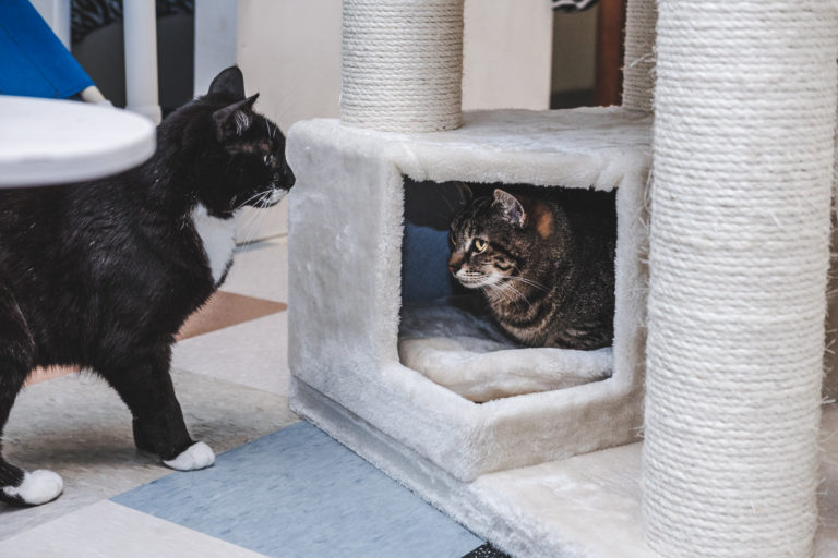 Photo of Place Your Cat in the Lap of Luxury with a Cat Condo